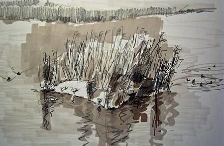 birds at Welney sketch