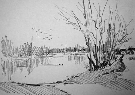 Pencil sketch of birds at impington lake cambridge uk
