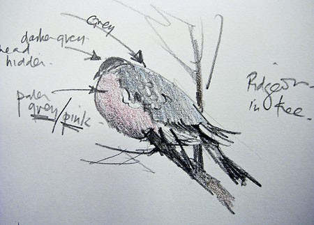 sketch of a woodpigeon
