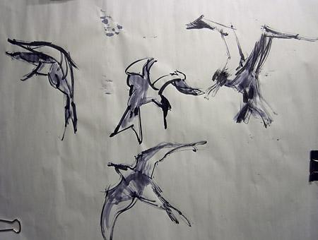 sea birds and gull sketch
