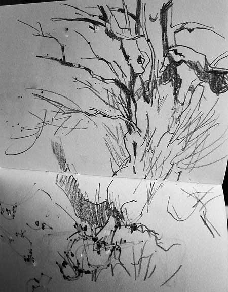 alder tree sketch in pencil