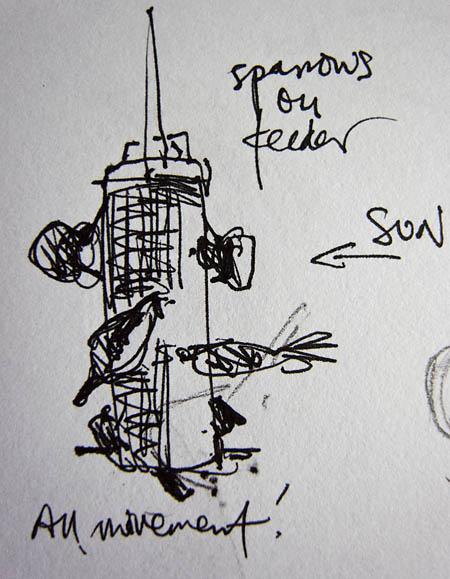 tits on garden feeder pen drawing