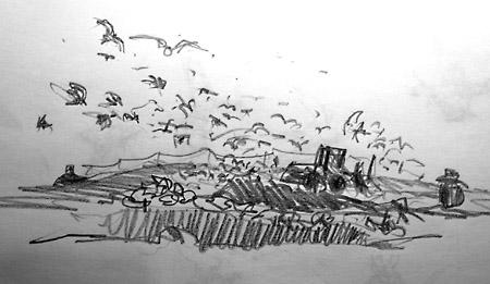 birds at city rubbish dump