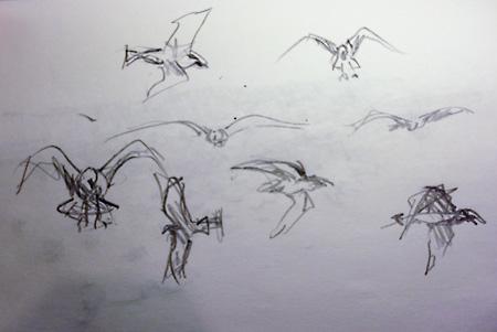sketch birds cambridge dump