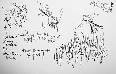 Pen Sketch At A Cambridge Pond Waiting For Wagtails